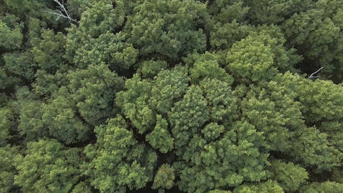 Aerial video of a forest wave in the wind Footage