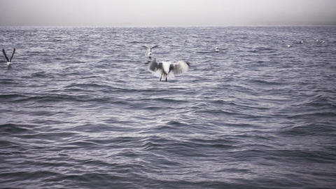 Group Of Seagulls On Water Footage