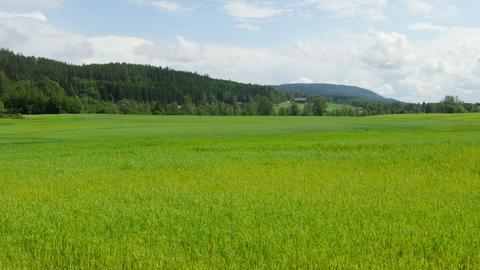 norwagian village farm, near oslo, norway, timelapse, zoom in, 4k Footage