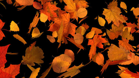 Autumn Leaves Transitions alpha channel Stock Video Footage