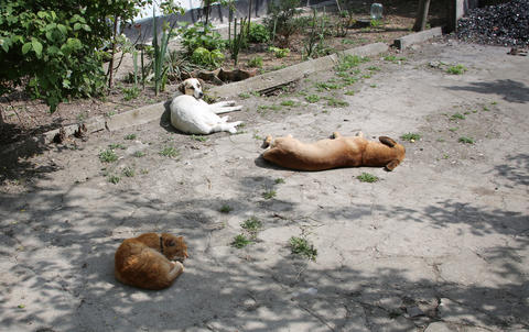 Two dogs and a cat are basking in the asphalt in the Crimea Foto