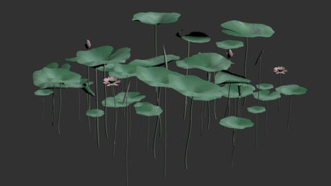 Swinging Lotus,Alpha Channel Transparent CG動画素材