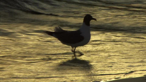 Seagull in the shore Footage