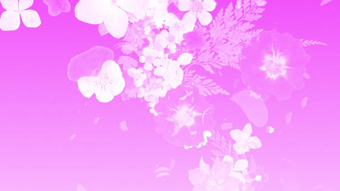 blooming flower bouquets, japanese style, pink silhouette Animation