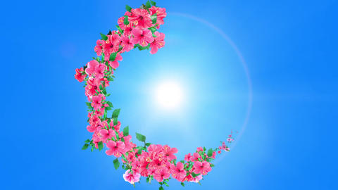 Hibiscus blooming in summer sky 3 CG動画