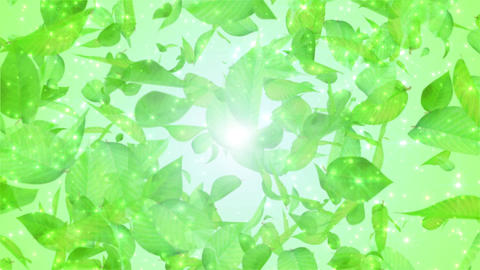 fresh green leaves exploding, light green background Animation