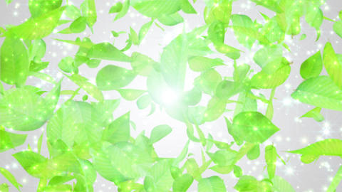 fresh green leaves exploding, white background CG動画素材