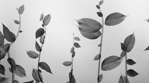 Growing plant image, black and white, Ink painting style Animation