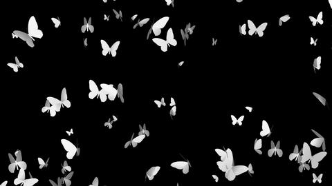 butterflies, black and white Animation