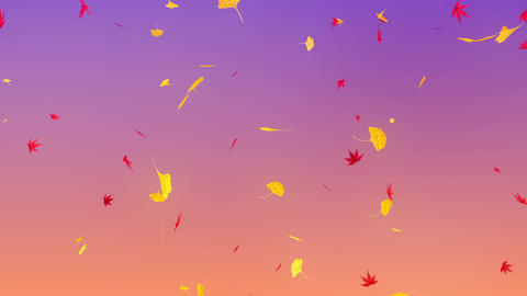 Maple & ginkgo leaves falling down, purple background Animation
