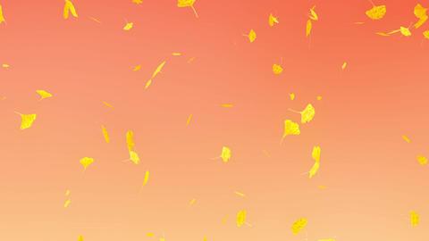 Ginkgo leaves falling down, orange background Animation