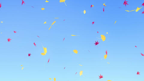 Maple & ginkgo leaves falling down, sky blue background CG動画
