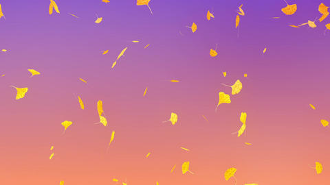 Ginkgo leaves falling down, purple background Animation