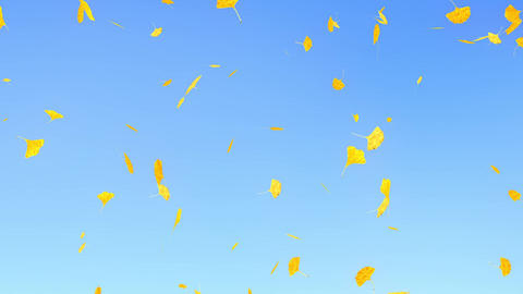 Ginkgo leaves falling down, sky blue background CG動画