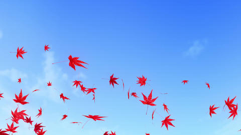 maple leaf scattering in blue sky 2 CG動画