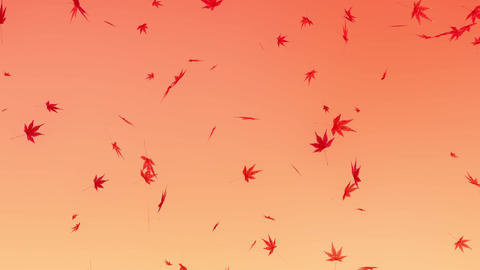 Maple leaves falling down, orange background Animation