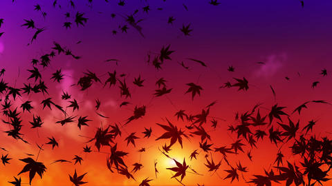 maple leaf scattering in evening sky Animation
