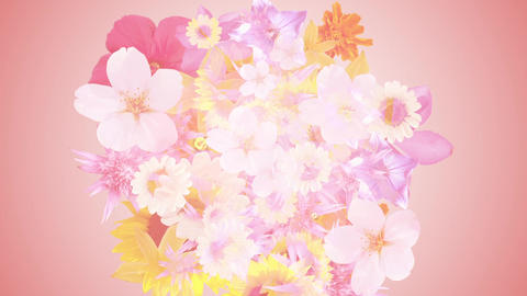 Bouquet image, pink background 1 CG動画素材