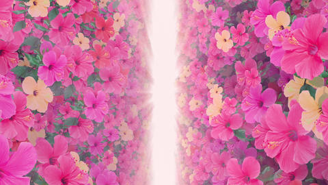 passage where a lot of flowers bloom pink light, straight 애니메이션