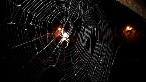 Spider hanging on his canvas, waiting for prey to midnight on a street less crow Footage