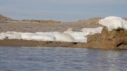 Polar bear sleeping on ice Footage