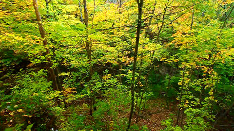 Illinois Autumn Forest Scenery Footage