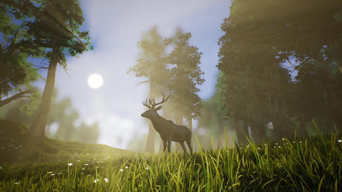 Lonely Deer 3 Stock Video Footage