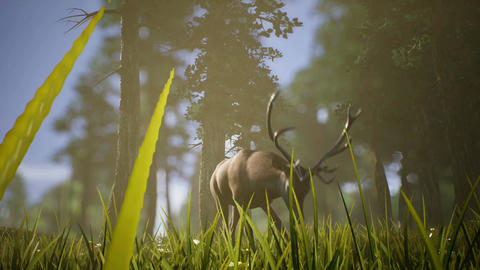 Lonely Deer 4K Animation