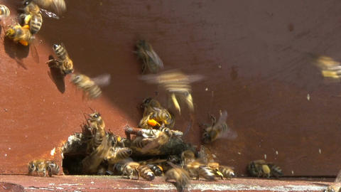 Roy of bees flies into a beehive Footage