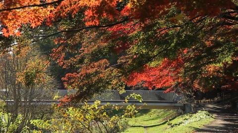 Autumn Leaves / Fall Colors / Bridge - Fix ライブ動画