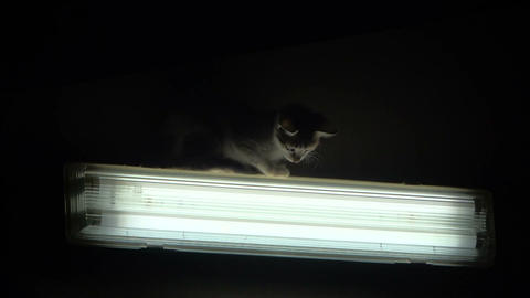 Cat on the Lamp Stock Video Footage