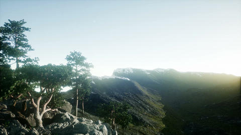 4k Scandinavian landscape. Several lonely pines on a rock. Finland in the early Footage