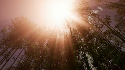 The sun's rays make their way through the bamboo grove Footage
