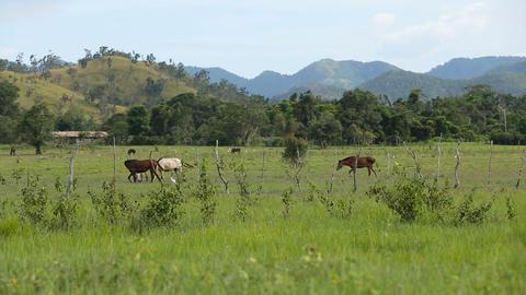 Horses grazing in green meadow Footage