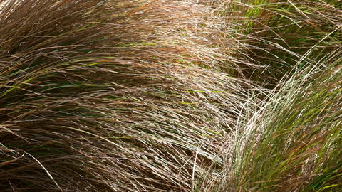 Wind Is Swaying Wild Grass On The Meadow stock footage