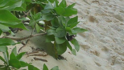 Monarch butterfly flight Footage