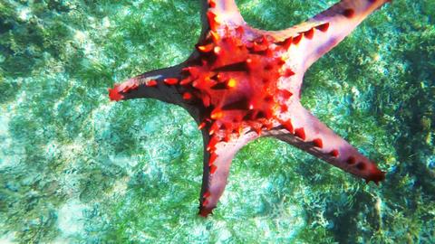 Starfish on the sandy bottom Footage