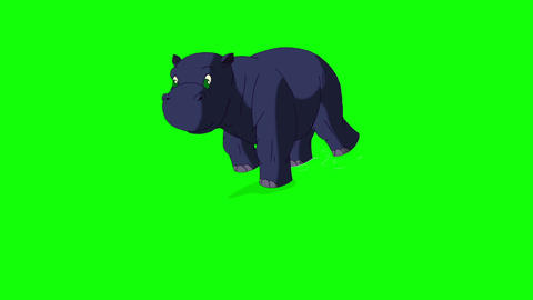 Little Blue Hippo Emerges from the Water Chroma Animation