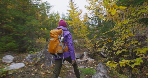 Hiker woman hiking in Autumn forest on hike in Fall mountain landscape Live Action