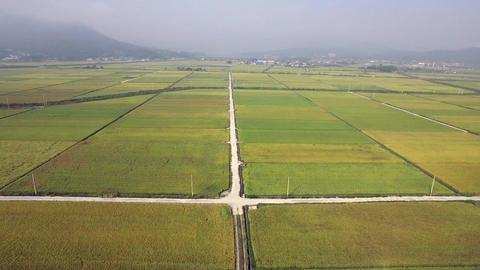 gang jin landscape rice field Filmmaterial