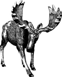 Big moose. Ink drawing ベクター