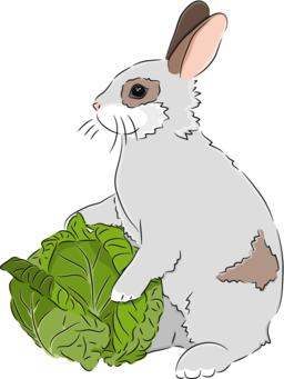 Rabbit with Cabbage ベクター