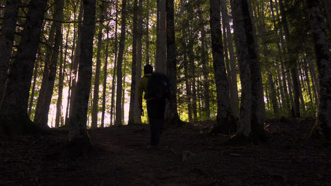 Man going into the woods Nature Bild