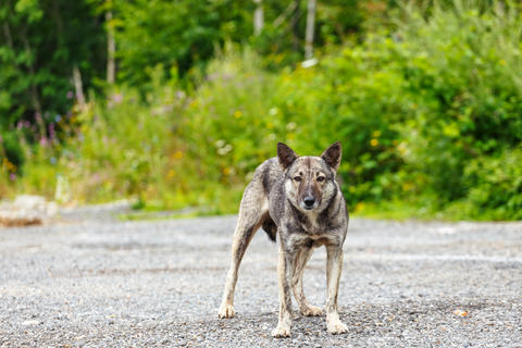 furious dog Fotografía