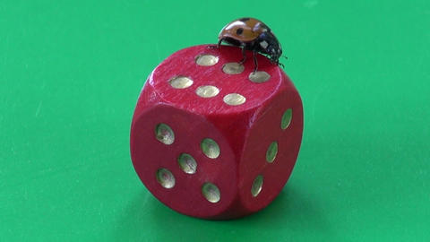 success concept – ladybug ladybird on game dice with number six Footage