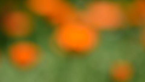 blur medical herb calendula marigold flowers Live Action
