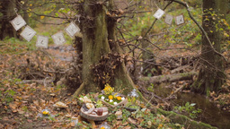 Eco Forest Wedding Salty Bar stock footage