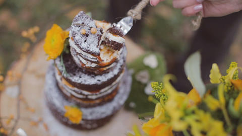Eco forest wedding naked cake Live Action