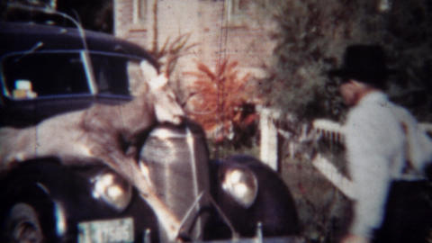 1939: Men inspect hunted dead whitetail deer strapped to classic car hood Footage