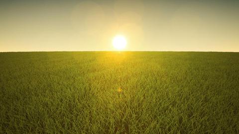 Flight over grass, sunset time Animation